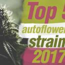 De Top 5 Autoflowering Cannabis Soorten Van 2017