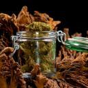Een Gids Over Het Correct Drogen En Uitharden Van Je Cannabis Toppen