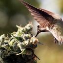 Vogels Verjagen Bij Je Cannabisplanten