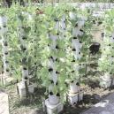 Wat is verticaal kweken en hoe vergroot dat de eindopbrengst?