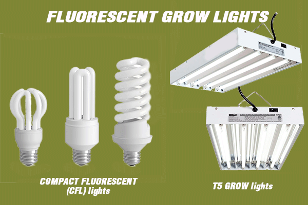 Fluorescent Lights
