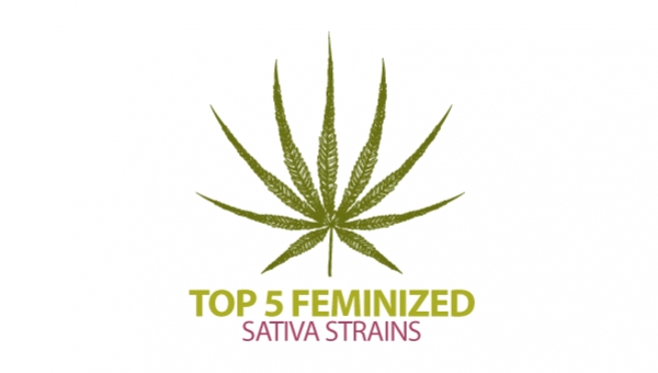 Top 5 Sativa Cannabis-variëteiten