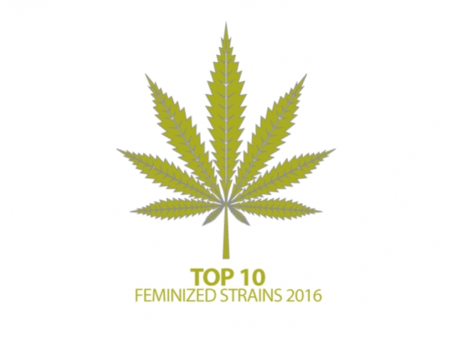 Top 10 gefeminiseerde strains van 2016