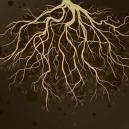 Gezonde wortels voor cannabisplanten
