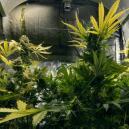 Het Gebruiken Van CO₂ Om Je Cannabis Opbrengsten Te Verhogen