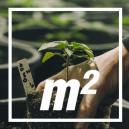 Hoeveel Cannabisplanten Per Vierkante Meter?
