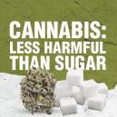 Cannabis Is Minder Schadelijk Dan Suiker
