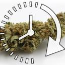 Hoe Droog Je Snel Je Verse Cannabistoppen?
