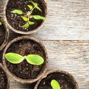 Bevatten Andere Plantensoorten Cannabinoïden?