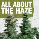 Alles over de Haze