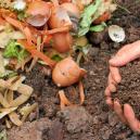 Cannabis En Compost: De Productie, Opslag En Het Gebruik