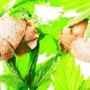 Top 10 Oorzaken Van Traag Groeiende Cannabis