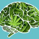 Hoe Beïnvloedt Cannabis Je Hersenen?