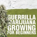Marihuana kweken voor beginners volgens de 'guerilla-methode