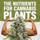 Voedingsstoffen voor cannabisplanten