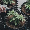Hoe kies je de juiste potten voor jouw cannabisplanten?