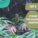 Top 5 soorten voor beginnende kwekers