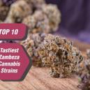 Top 10 smakelijkste strains van Zambeza Seeds