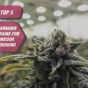 Top 5 cannabissoorten voor binnenteelt