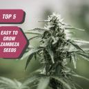 Top 5 Gemakkelijk te Kweken Zaden van Zambeza