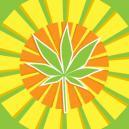 Top 5 feminized cannabissoorten voor warmere klimaten