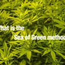 Wat is the Sea of Green methode?