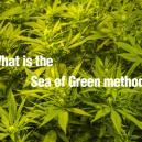 Wat is the Sea of Green methode?
