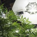 Verlichtingsschema's voor cannabisplanten