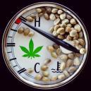 De ideale temperatuur voor het kweken van cannabis.